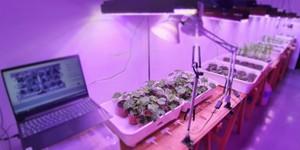 Plants fighting other plants inbioar