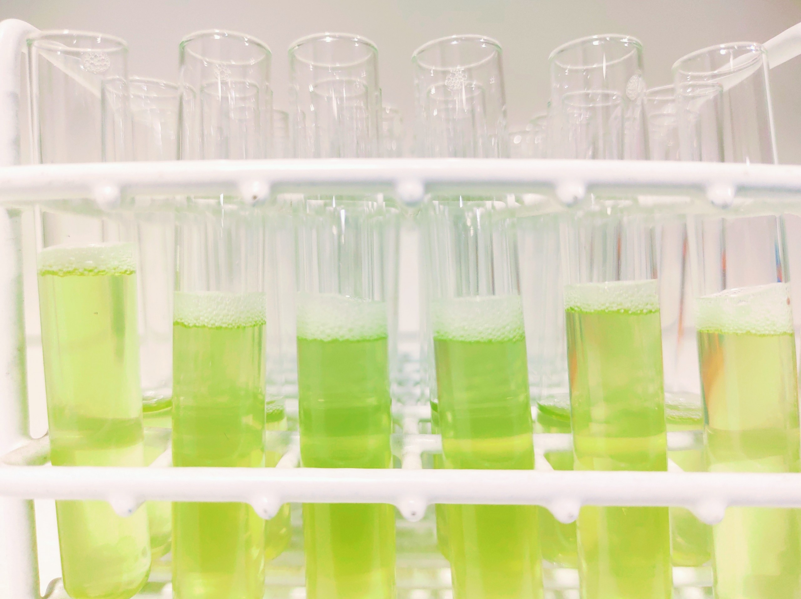 Screening of an aqueous plant extract library for antibiotic activities