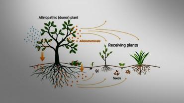 inbioar plants